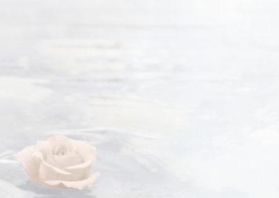 2096_Schwimmende Rose