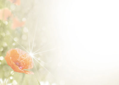 3076_Wiesenblume