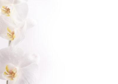 4056_Orchidee